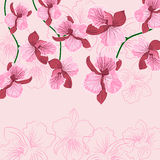 Pink floral background with orhid Pink floral bac Stock Photography