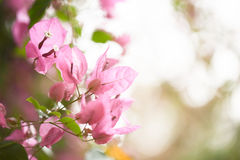 Pink floral background for your design Royalty Free Stock Image