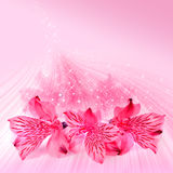 Pink floral card for Valentines day Royalty Free Stock Images