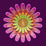 Pink floral. Royalty Free Stock Images