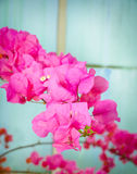Pink Floral Stock Images