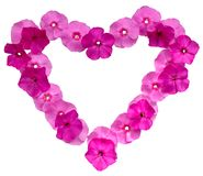 Pink floral frame Stock Photos