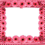 Pink floral frame from gerberas Royalty Free Stock Images