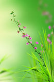 Pink floral and fresh grass Royalty Free Stock Image
