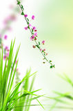 Pink floral and fresh grass Stock Photos