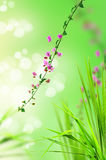 Pink floral and fresh grass Royalty Free Stock Photo
