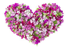 Pink floral lovely girl heart concept Royalty Free Stock Photography