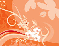 Pink Floral Ornament Backgrounds Stock Image