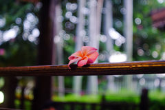 Pink floral over balcony Stock Photography