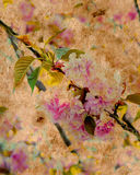 Pink Floral Parchment Stock Photography