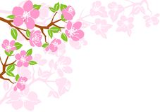 Pink floral patterns. Blossoming branch on a white background Royalty Free Stock Photo