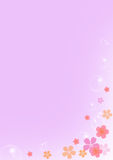 Pink floral in purple background Royalty Free Stock Photos