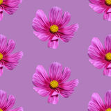 Pink floral seamless background. Vector illustration Stock Image