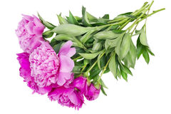 Pink floral summer Stock Photos