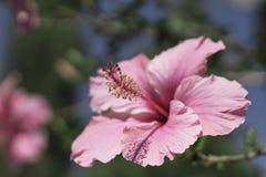 Pink-2 Flores y jardines fotos de archivo libres de regalías