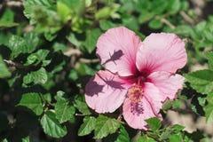 Pink-3 Flores y jardines fotos de archivo libres de regalías