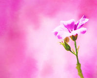 Pink flower. Beautiful watercolour with pink flower for your card Stock Image