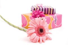 Pink flower. Boxes of gifts and pink flower stock photo