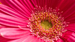 Pink flower Stock Photos