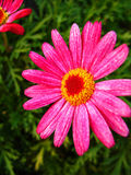 Pink flower. A closeup of a pink flower royalty free stock images