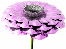 Pink flower. Big beautiful flower for your love Stock Photo
