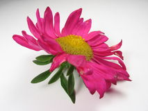 Pink Flower Stock Images
