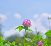 Pink flower. In the summer sunny day stock photos