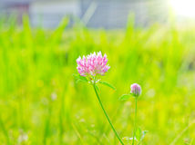 Pink flower. In the summer sunny day stock photo