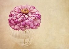 Pink flower. In  a vase Stock Photos
