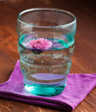 Pink flower. In a glass Royalty Free Stock Photo