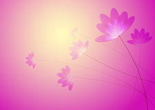 Pink flower. Pink transparent flowers, in the warm background, computer generated Stock Images