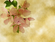 Pink flower Stock Photography