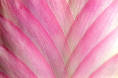 Pink flower. Details of a tropical pink flower Stock Photography