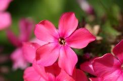Free Pink Flower Stock Photo - 2992420
