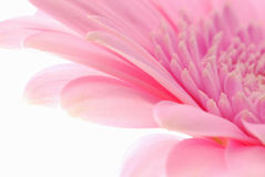Pink Flower Royalty Free Stock Photo