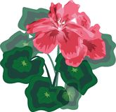 Pink flower. With green leaves. Vector illustration stock illustration