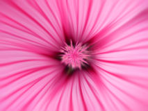 Pink Flower. A close-up of a pink flower Stock Photography