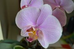 Free Pink Flower Royalty Free Stock Photo - 94020165