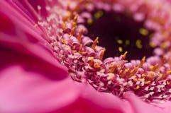 Pink flower. A close up photo of a Pink flower Stock Photos