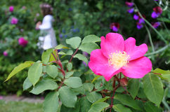Pink flower against a little girl playing in the garden. As a ferry. Childhood concept . copy space Stock Photo
