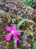 Pink flower against tree. Pinkflower, totalnature, beautifulnature, finnishnature, flowers, beauty, naturelove, colours, colorful, leaf, leaves, summer stock image