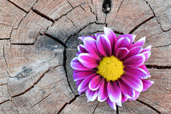 Pink flower on aged wood Stock Photo