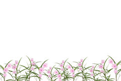 Free Pink Flower And Small Tree On White Background,with Clipping Pat Stock Photo - 68603770