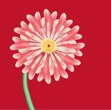 Pink flower is aster against red background Stock Photo