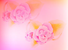 Pink flower background Royalty Free Stock Photos