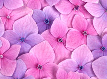 Pink flower background Stock Photos