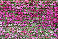 Pink flower background. Stock Photo