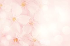 Free Pink Flower Background Stock Photo - 40444370