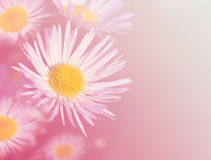 Pink flower background Royalty Free Stock Image
