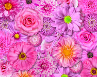 Pink Flower Background Selection of Various Royalty Free Stock Image